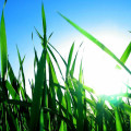 green-grass-sky_full-1024x768